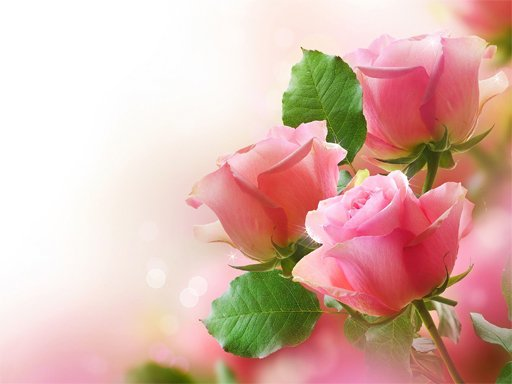 Pink Roses Puzzle Online